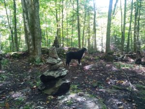 Forest trails with Grail's resident canine, Ojo