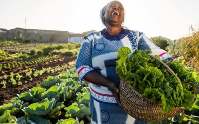 Sunny Days Ahead: How SunCulture is harnessing the sun to irrigate small farms across Africa